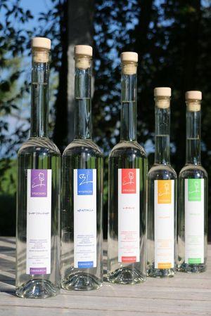 Führung und Degustation Weinbau Haselrain